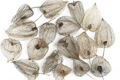 Dried Fruits of the Cape Gooseberry Royalty Free Stock Photography