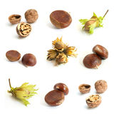 Dried fruits of the forest collage Royalty Free Stock Image