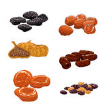 Dried Fruits set. Isolated vector icons. Of raisins, dates, figs, apricots, plums, prunes. Sweet and dessert snacks Royalty Free Stock Photo