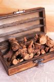 Dried galangal root Stock Image
