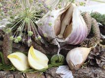 Dried garlic cloves Royalty Free Stock Photos