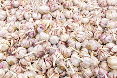 Dried garlic for sale on a market Stock Photos