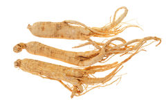 Dried Ginseng Royalty Free Stock Photography