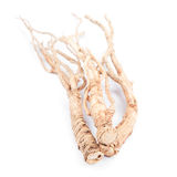 Dried ginseng Royalty Free Stock Images