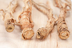 Dried ginseng Royalty Free Stock Photo