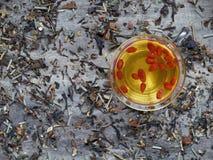 Dried goji berries soaked in green tea. Organic healthy goji berries soaked in hot tea Stock Photos