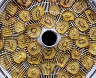 Dried golden kiwi fruit on a food deyhydrator Stock Photos
