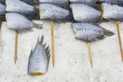 Dried gourami fish Royalty Free Stock Image