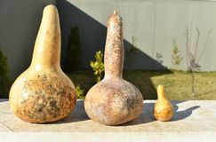 Dried gourds of different sizes royalty free stock photo