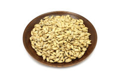 Dried grains of barley malt in a wooden plate Stock Images