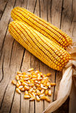 Dried grains of maize Royalty Free Stock Image