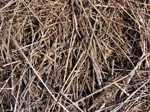 Dried grass Royalty Free Stock Images