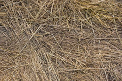 Dried grass afield Stock Photography