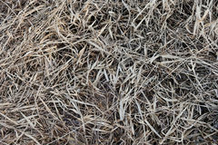 Dried grass. Stock Photography
