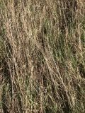 Dried grass close view stock images