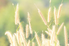 Dried grass in forest. Background green Royalty Free Stock Image