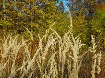 Dried grass in a forest. Selective focus Royalty Free Stock Images