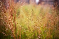 Dried grass in a hot summer day stock image