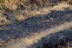 Close up burned field in the countryside stock photos