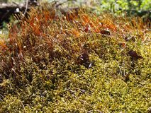 Dried Grass And Moss In Russian Sunny Forest. Nature colorful photo. Picture of plants in the middle band. Dry landscape surface. Summer natural cover stock images