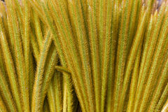 Dried Grass of Mount Merapi, Indonesia Royalty Free Stock Image