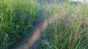 Dried grass next to the path stock footage