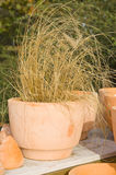 Dried grass in a pot stock photo