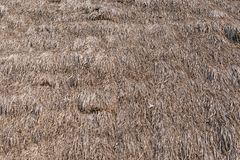 Dried grass roof Stock Images