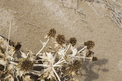 Dried grass in the sand Stock Photography