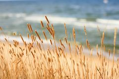 Dried grass at the seaside. On top of a cliff Royalty Free Stock Photos