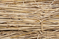 Dried grass Royalty Free Stock Photo