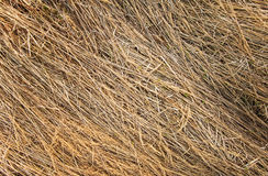 Dried grass texture Stock Images