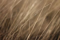 Dried grass texture for abstract background