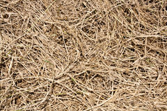 Dried Grass Texture Background Royalty Free Stock Photography
