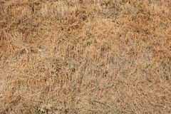 Dried grass texture background in a sunny summer day Stock Photo