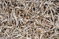 Dried grass textures Royalty Free Stock Photos
