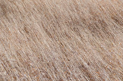 Dried grass of winter Stock Image