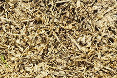 Dried grasses Stock Photos