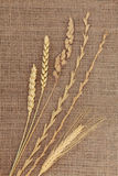 Dried Grasses Royalty Free Stock Images