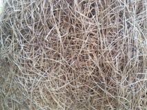 Brown grass nest texture. Brown nature background wallpaper stock photo
