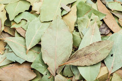 Dried green bay leaves close up Royalty Free Stock Images