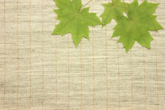 Dried green leaves. Over natural linen striped textured fabric textile stock illustration