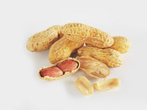 Dried ground nut. On white background Royalty Free Stock Photography