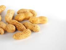 Dried ground nut. On white background Stock Photos