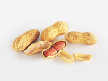Dried ground nut. On white background Royalty Free Stock Photo