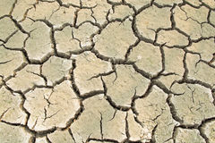 Dried ground soil is crack as texture and background Royalty Free Stock Image