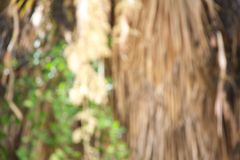 Dried hanging palm tree branches and green leaves of climber plant. Out of focus. Background Stock Photo