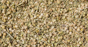 Dried harmala seed Stock Photos