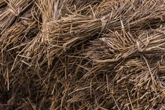 Dried hay or straw with grains Stock Image