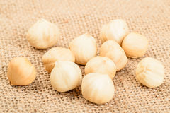 Dried hazelnut Stock Photography